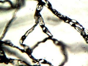 Filamenten 200-500x vergroot