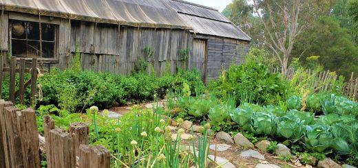 Permacultuur in achtertuin
